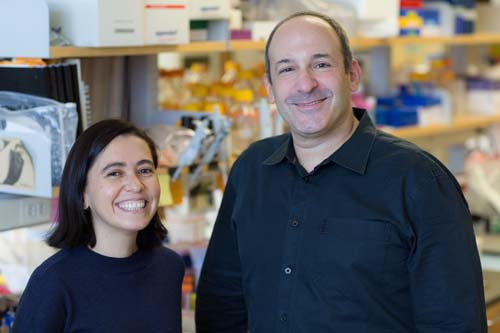 Martin Cohn, Ph.D., and Ph.D. candidate Francisca Leal have discovered how snakes evolved to lose their legs.
